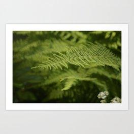 Jane's Garden - Fern Fronds Art Print