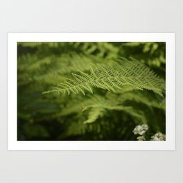 Jane's Garden - Fern Fronds Art Print