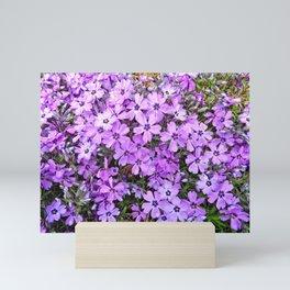 Lavender Creepers Mini Art Print
