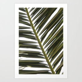 Palme Art Print