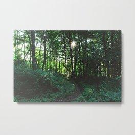 Forest Trail XXV Metal Print