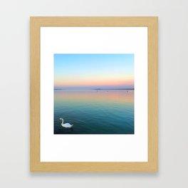 Swan in the Lake at Sunset Framed Art Print