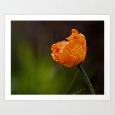 New Poppy Art Print