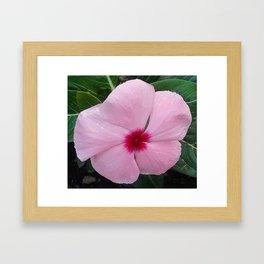 Simplicity in a Pink Flower Framed Art Print
