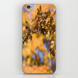 Autumn Orange Backdrop iPhone Skin