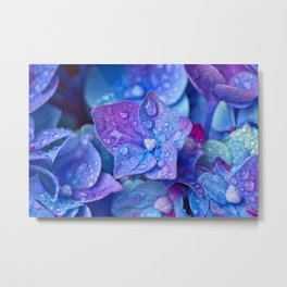 Hydrangea Flowers Close Up Metal Print