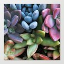 Colorful Succulents by lisaargyropoulos