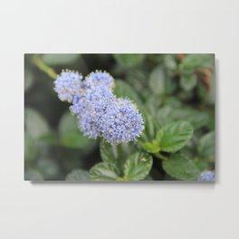 Blue Pon Pon Flower Metal Print