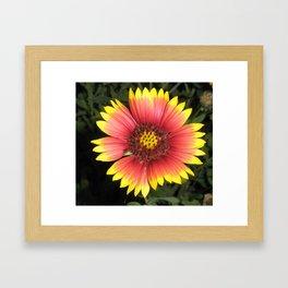 Indian Blanket flower Framed Art Print