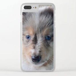 Blue-eyed Portrait of a Shetland Sheepdog Puppy Clear iPhone Case
