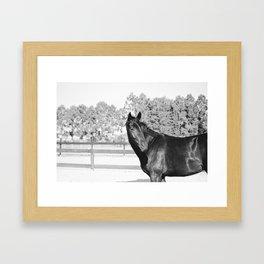 Black & White Bubba Framed Art Print