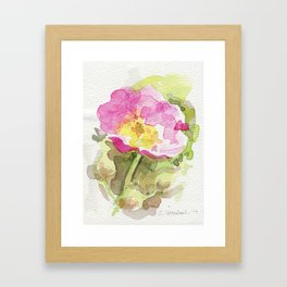 Wild Summer Rose Framed Art Print