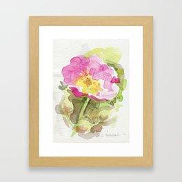 Wild Summer Rose Framed Art Print