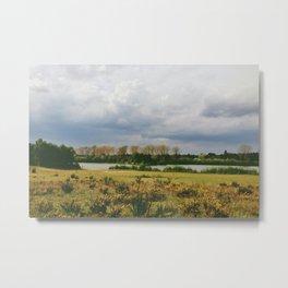 lake and gorse bushes at lynford water, norfolk, uk Metal Print