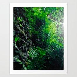 Rocks and Ferns Art Print