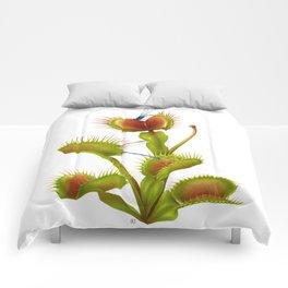 Dionaea muscipula - Venus flytrap Comforters