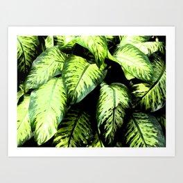 rainforest leaves Art Print