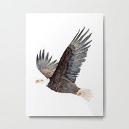 Soaring  American Eagle  Metal Print