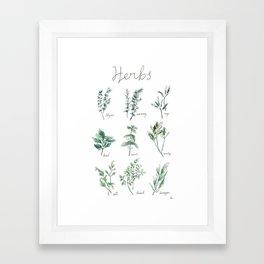 Herbs Botanical Illustration Framed Art Print