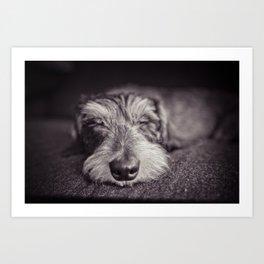 DACKEL DOG#5 Art Print