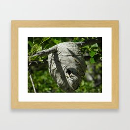 Yellow Jacket Nest Framed Art Print