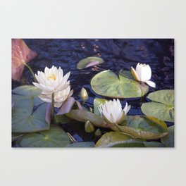 Longwood Gardens - Spring Series 29 Canvas Print
