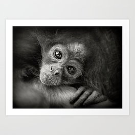Spider monkey Art Print
