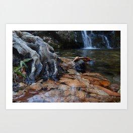Leaves Underwater at Cascade Falls Art Print