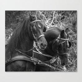 Friesian horses Canvas Print