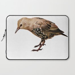Young Thrush Laptop Sleeve