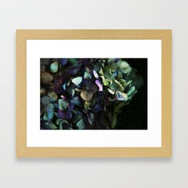 hydrangea I Framed Art Print