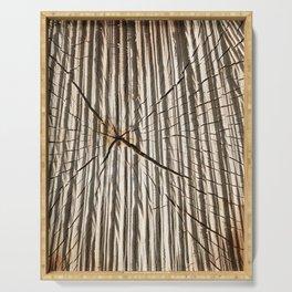 trunks birch sawn Serving Tray