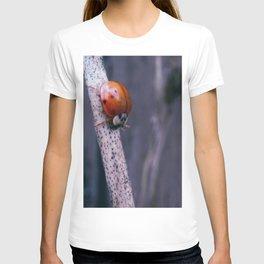 Macro ladybug T-shirt