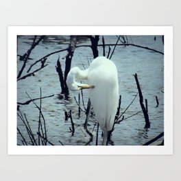 Great Egret in Water A108 Art Print