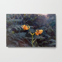 Tiger lilies and sunlight Metal Print