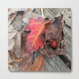 Beginnings of autumn Metal Print