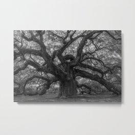 1,500 Year Old Angel Oak Tree of Charleston, South Carolina black and white photography / photograph Metal Print