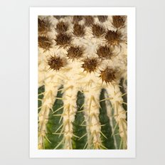 Cactus collection 2779 Art Print