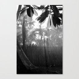 Morning Mist Maldives Canvas Print