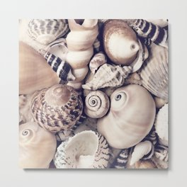 Vintage  Sea Shell Collection Coastal Style Metal Print