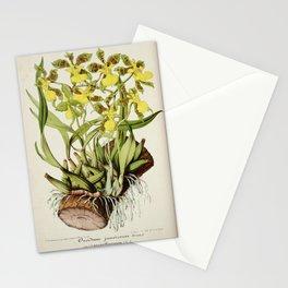 Flower oncidium Stationery Cards