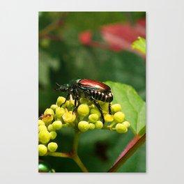 Japanese Beetle on grapevine Canvas Print