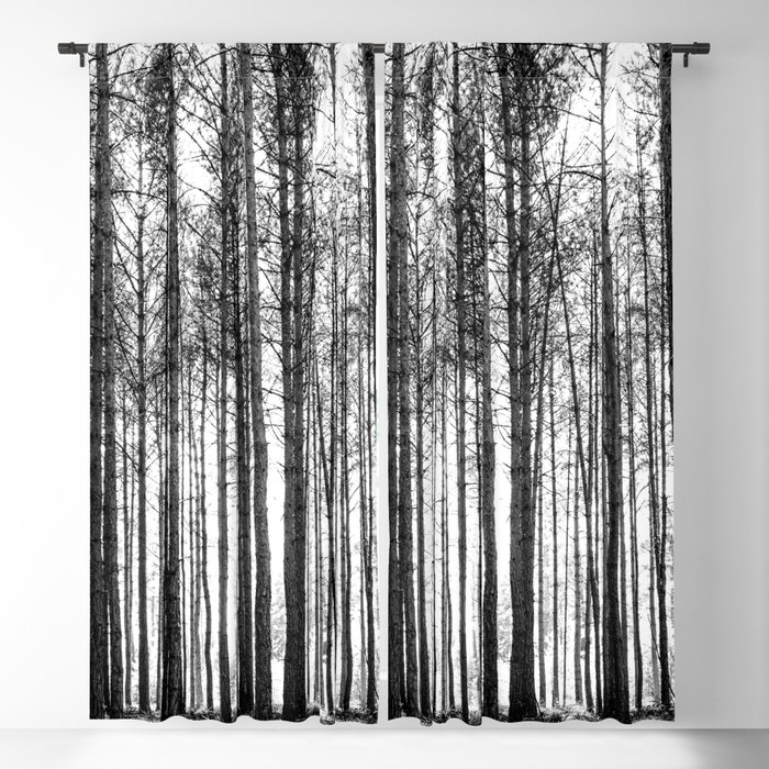 Trees In Forest Landscape Black And