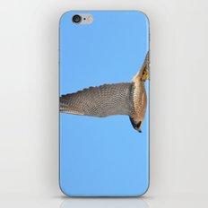 Peregrine Falcon Close Up 2 iPhone & iPod Skin