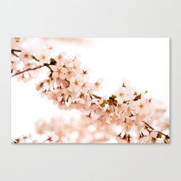 Cherry Blossom Explosion Canvas Print