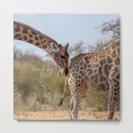 Giraffe 6 Metal Print