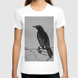 Carib Grackle T-shirt