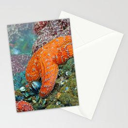 Summer Starfish Stationery Cards