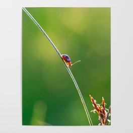 Little red bug perching on grass Poster