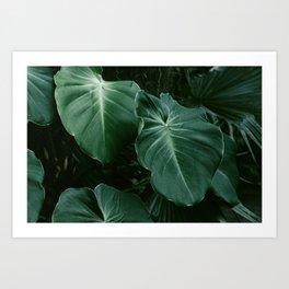 Tropical Plants on Black Art Print